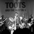 Concert TOOTS AND THE MAYTALS