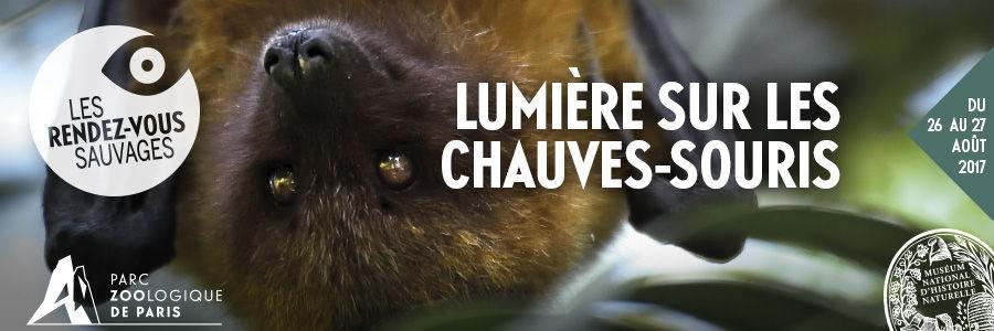 LUMIÈRE SUR LES CHAUVES-SOURIS